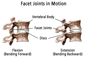facet_joints_lateral_illus019.png